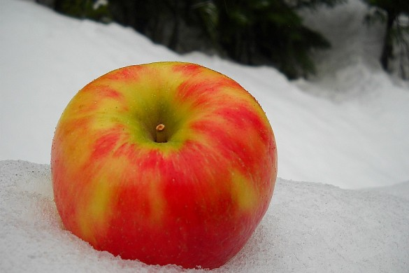 Apple in the snow