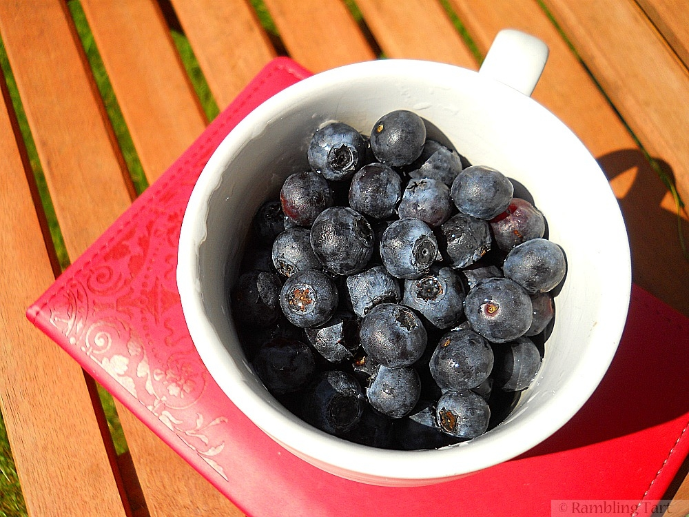 Blueberries and journal