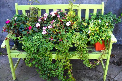 flowered bench