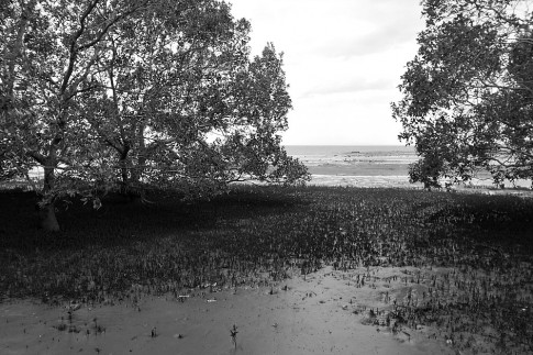 Deception Bay mangrove