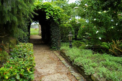 ivy covered gate