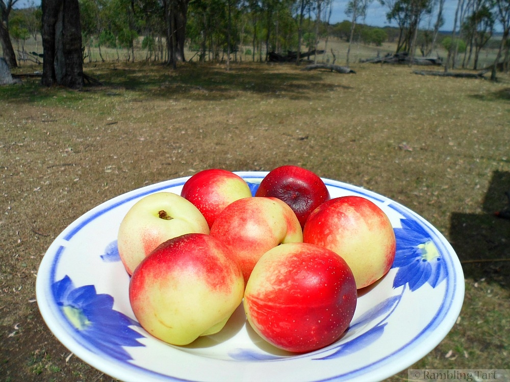 white nectarines in a bowl