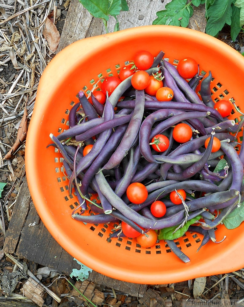 tomatoes and purple beans