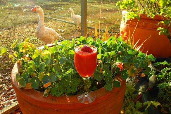 smoothie in the garden