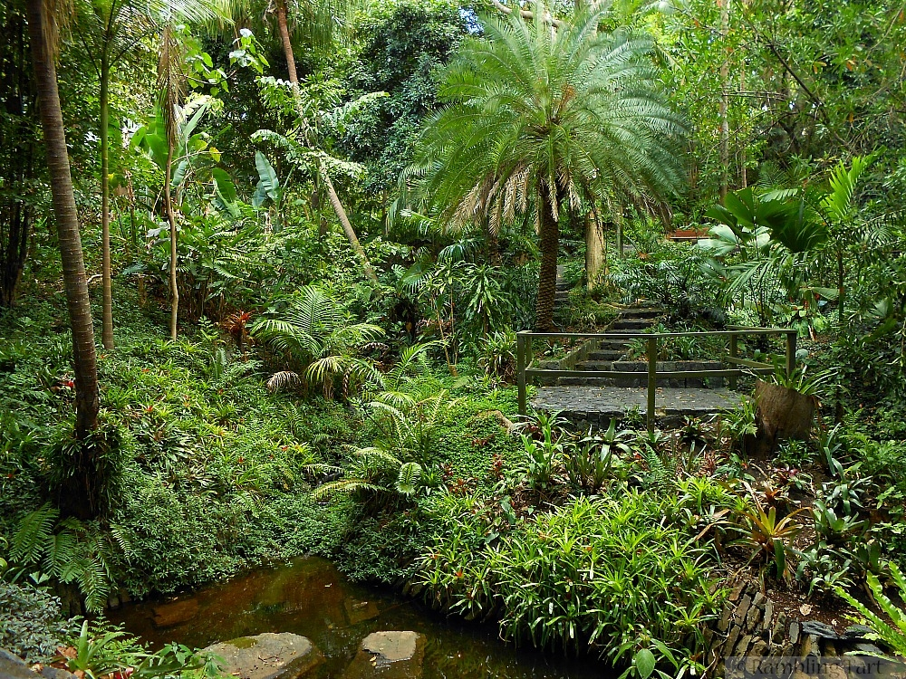 Brisbane rainforest