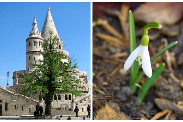 Fisherman's Bastion 03 by michael clarke stuff and snowdrop by Takkk