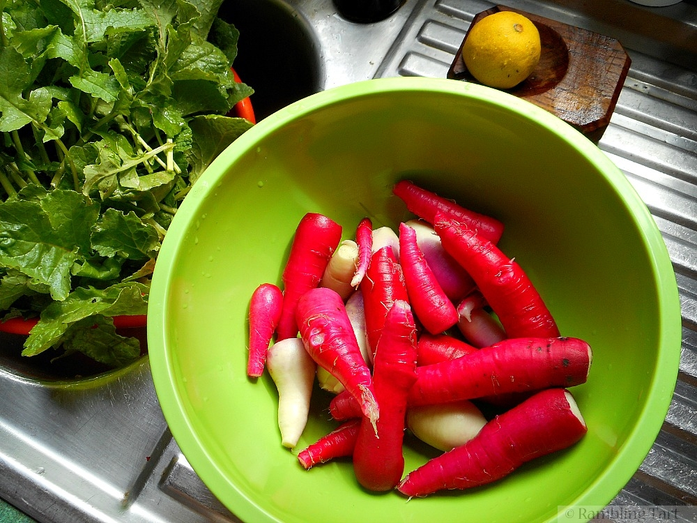 washed radishes and greens