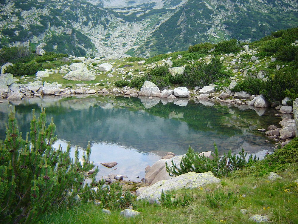 Small pool and Pinus mugo shrubs, near Popovo Ezero, Pirin Mountains, Bulgaria by kikosev