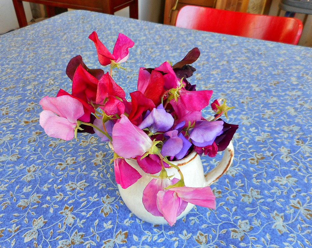 jug of sweetpeas