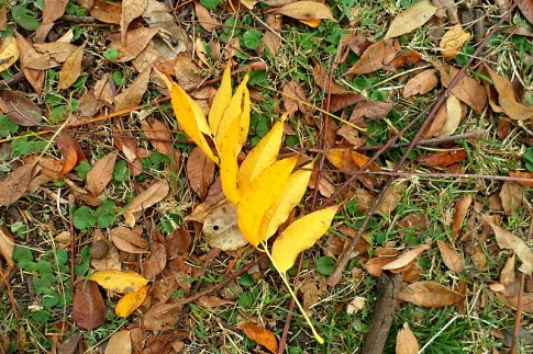 Autumn leaves in winter