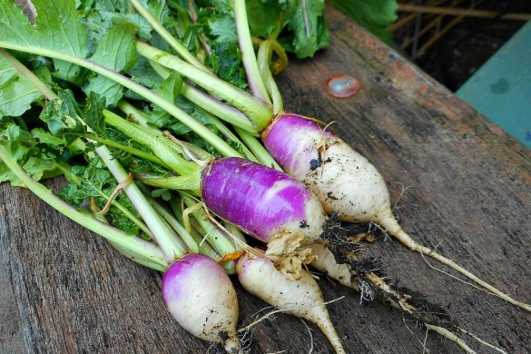 purple radishes