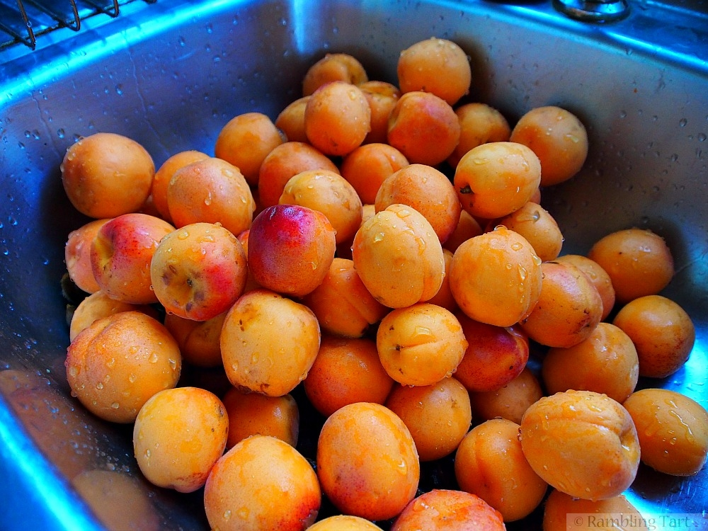 apricots in sink