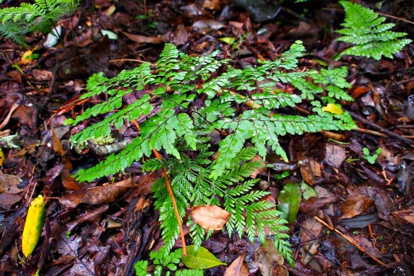 fern in the forest
