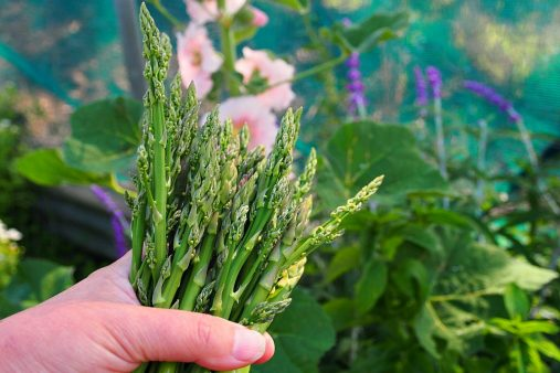 handful of asparagus