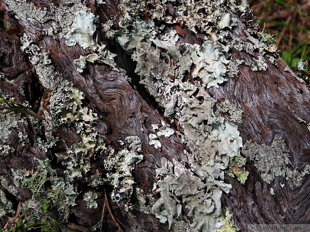 lichen on gray wood