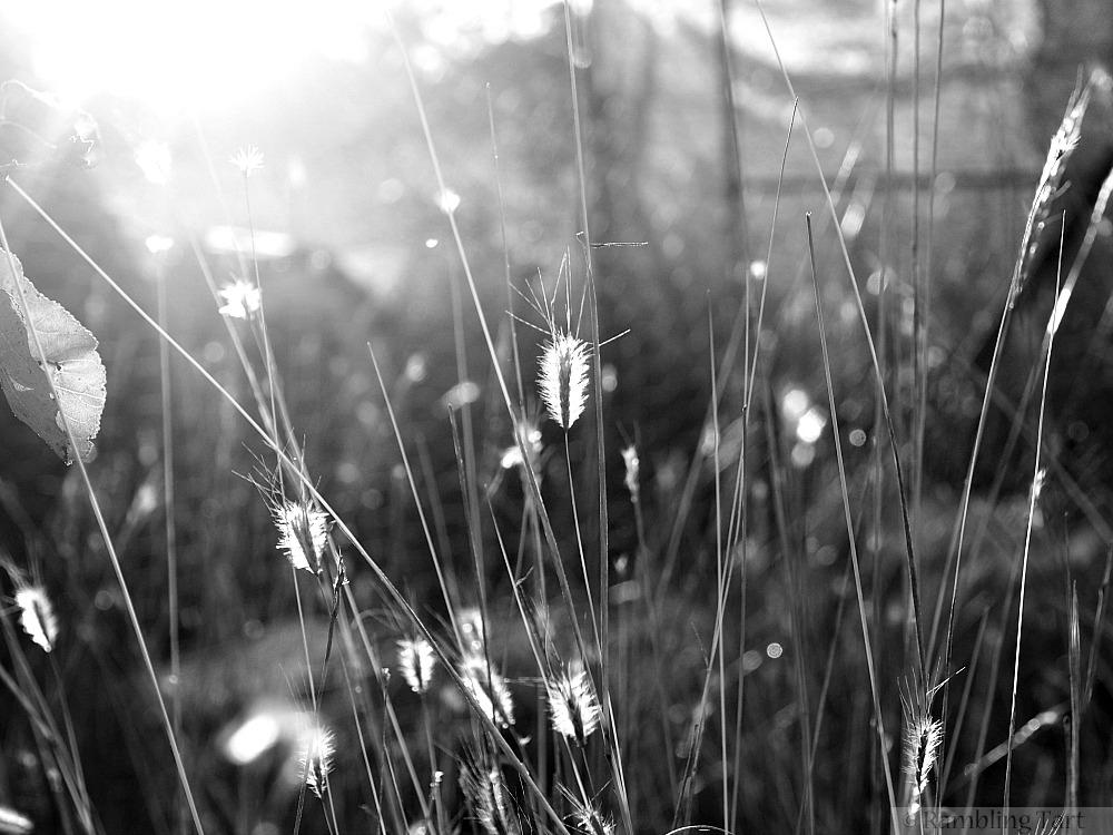 light black and white
