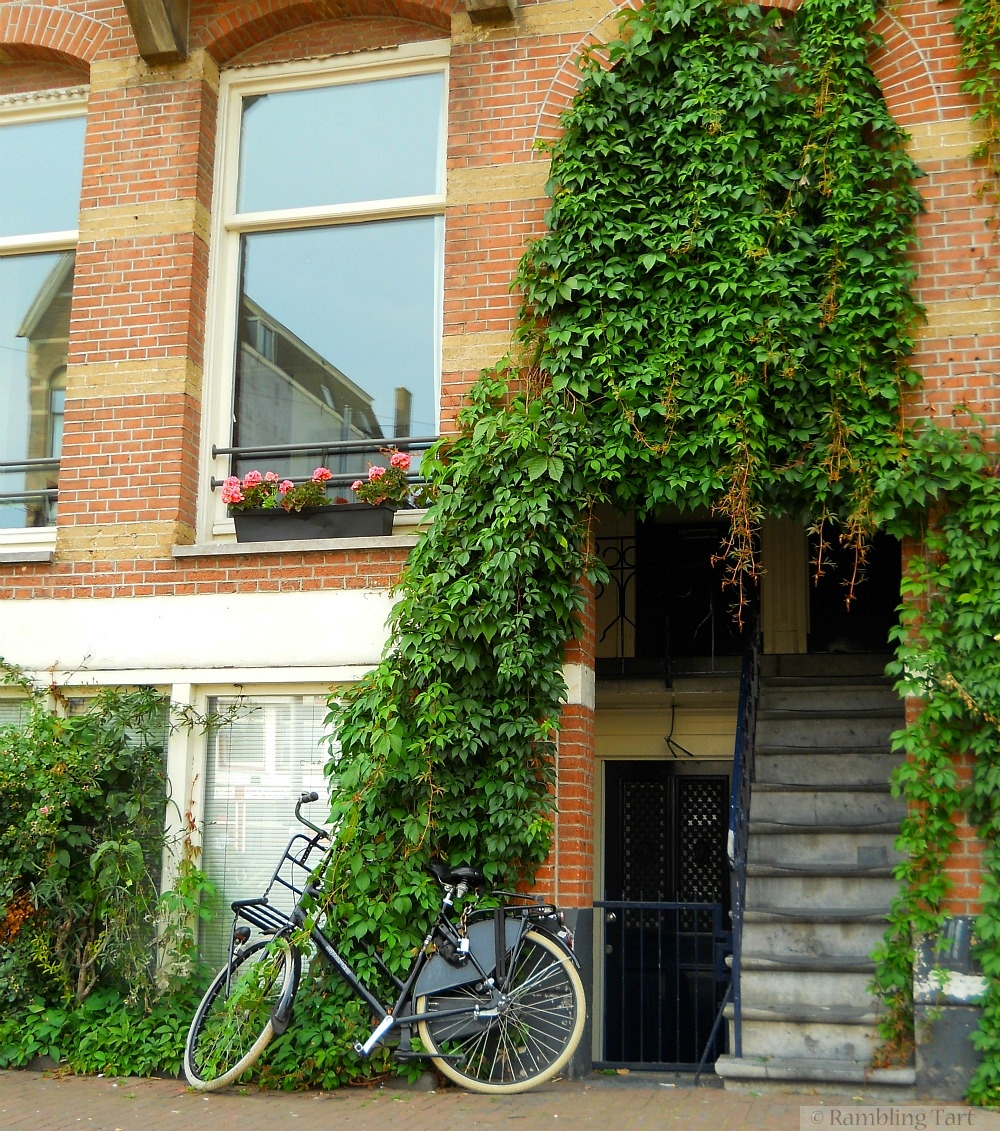 Bicycle and ivy