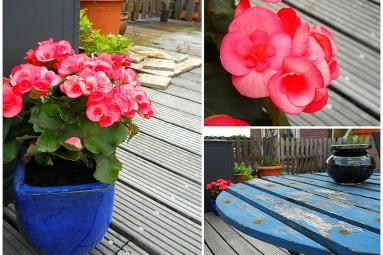 Terrace flowers