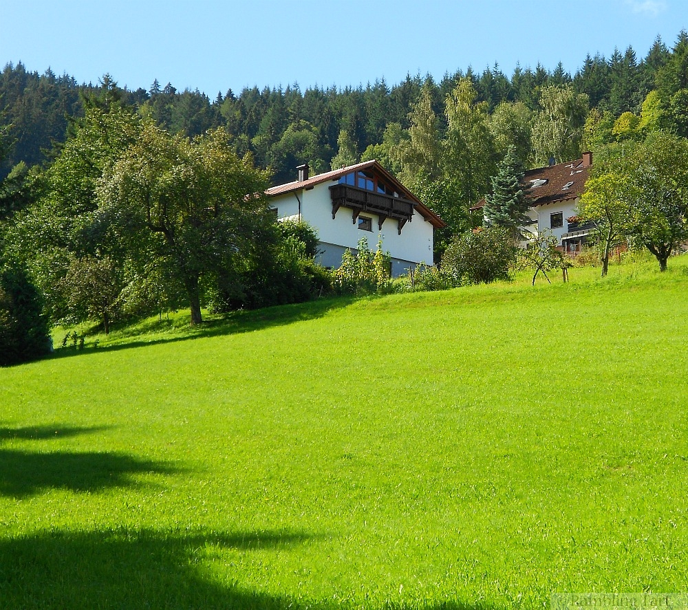 Black Forest meadow