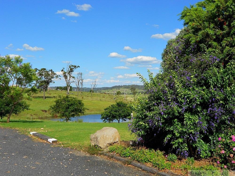 flowery pond