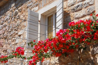 shuttered window with flowers