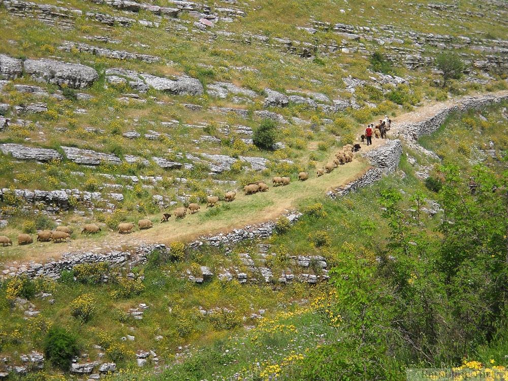 sheep farmers in Albania