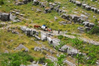 mule train in Albania