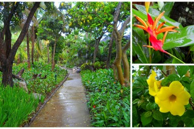 tropical garden in Fiji