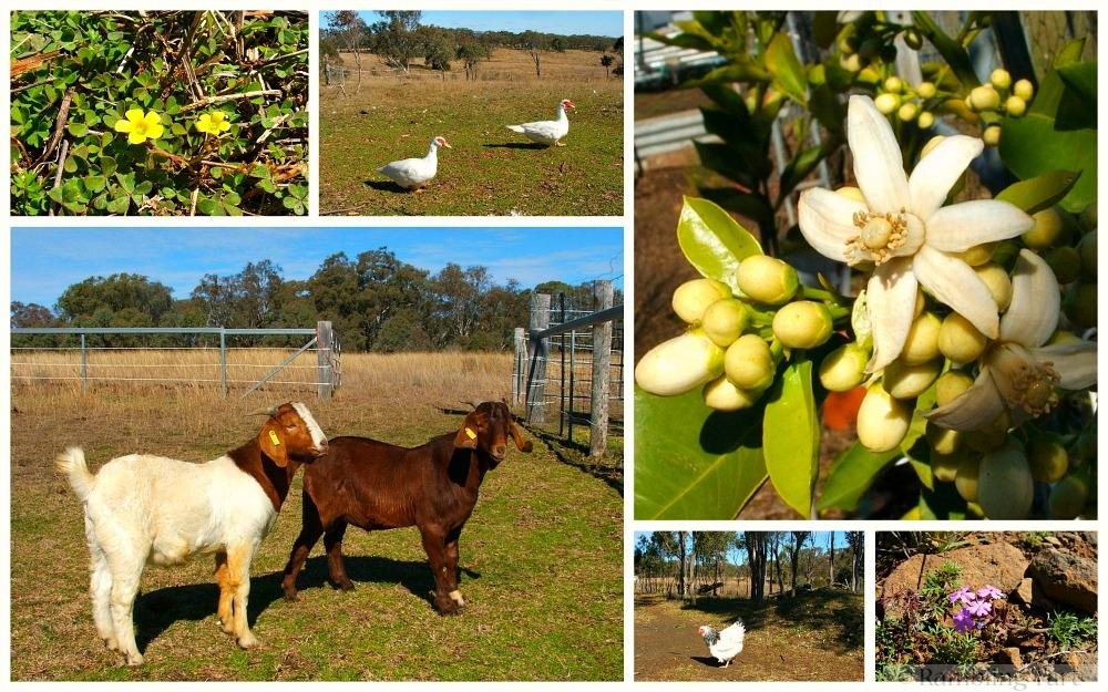 Queensland spring