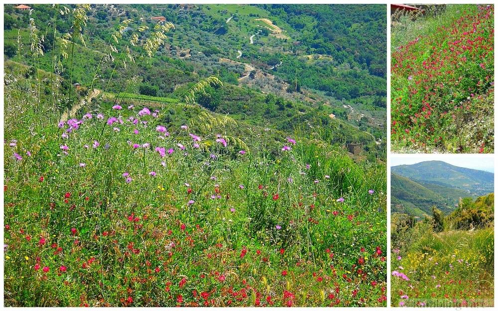 Italian wildflowers