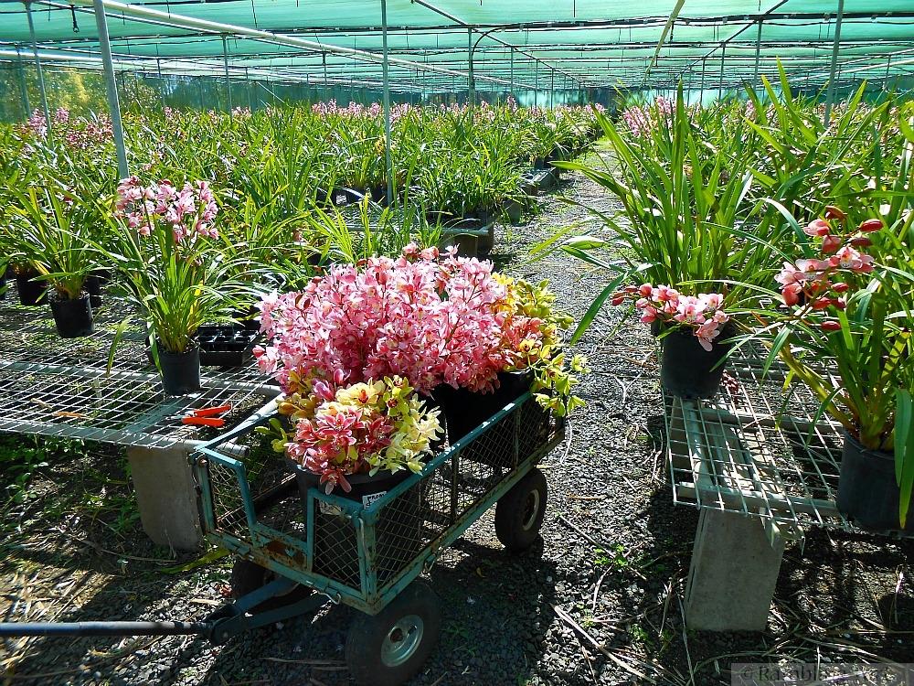 Queensland orchid farm