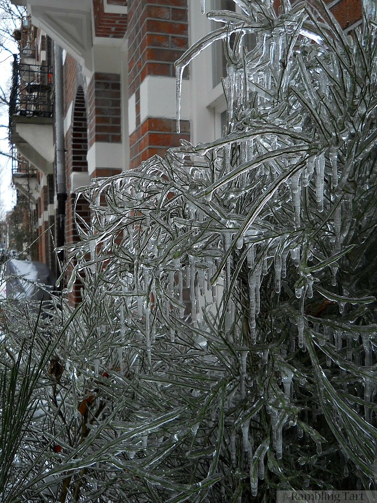 tree after an ice storm