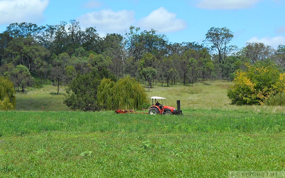 red tractor cutting hay