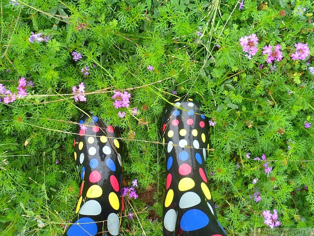 polka dot gum boots
