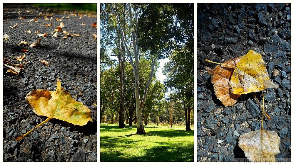 fallen leaves in Australia