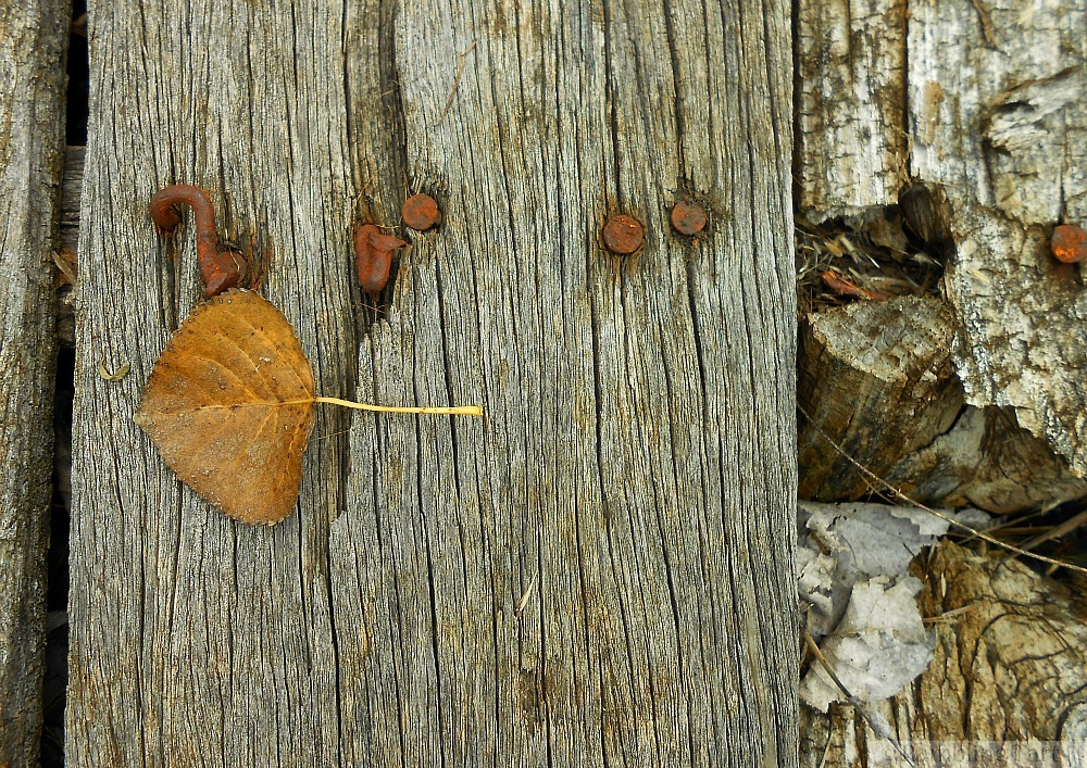 leaf on old plank