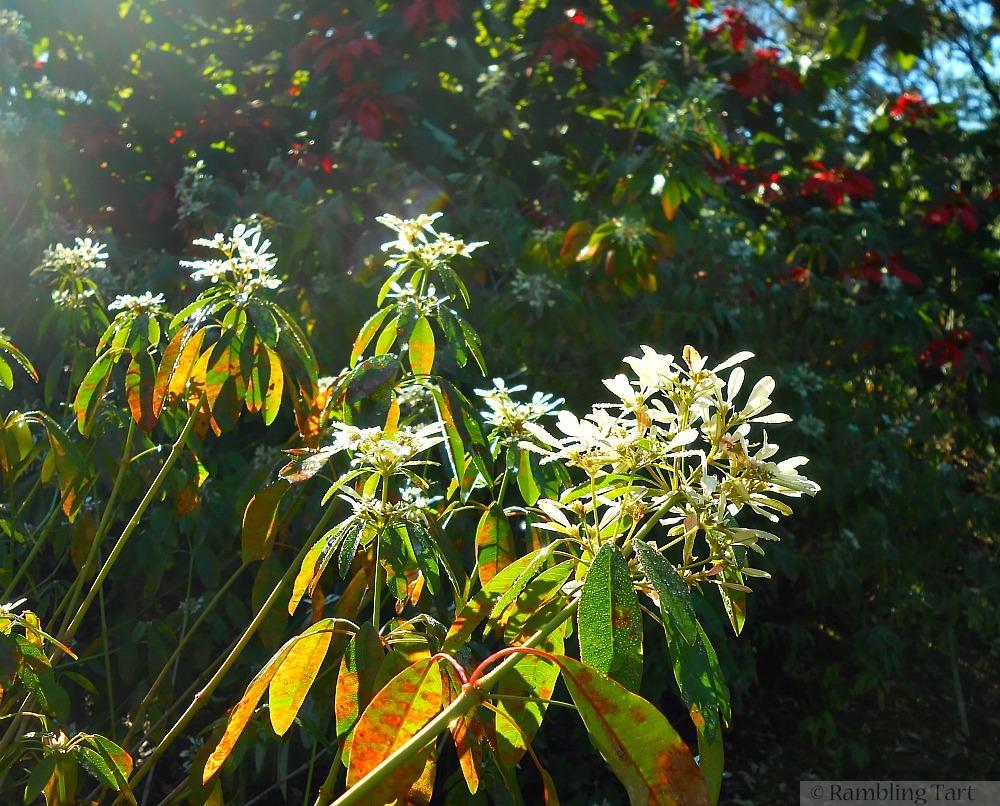 flowers in morning light