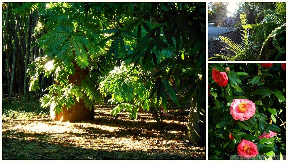 garden in morning light
