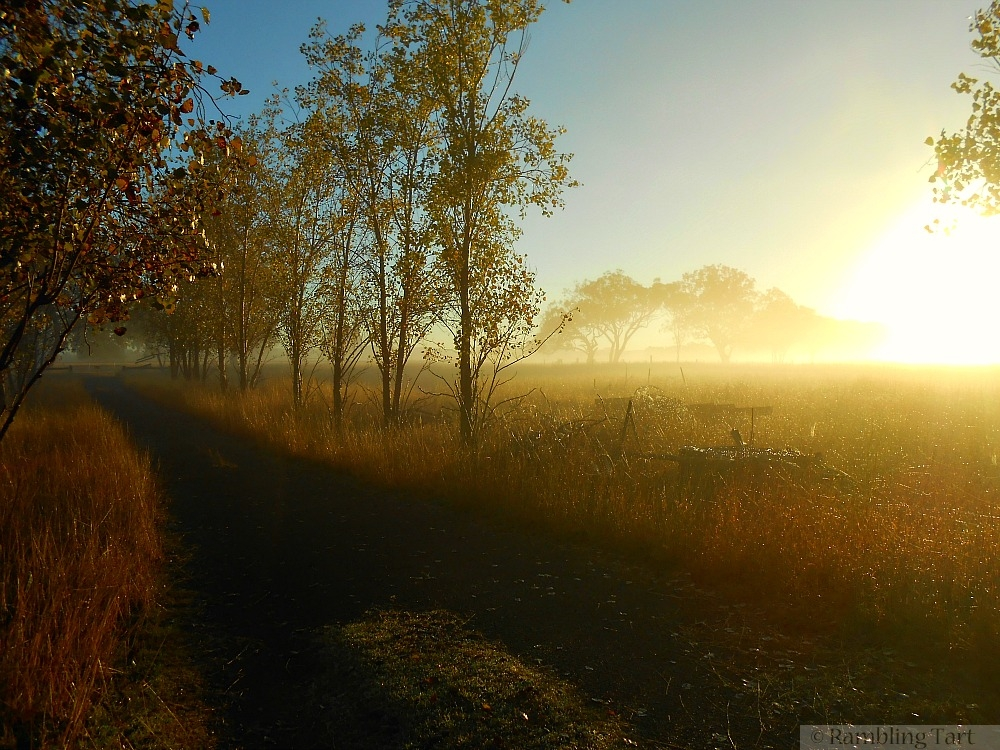 country lane sunrise