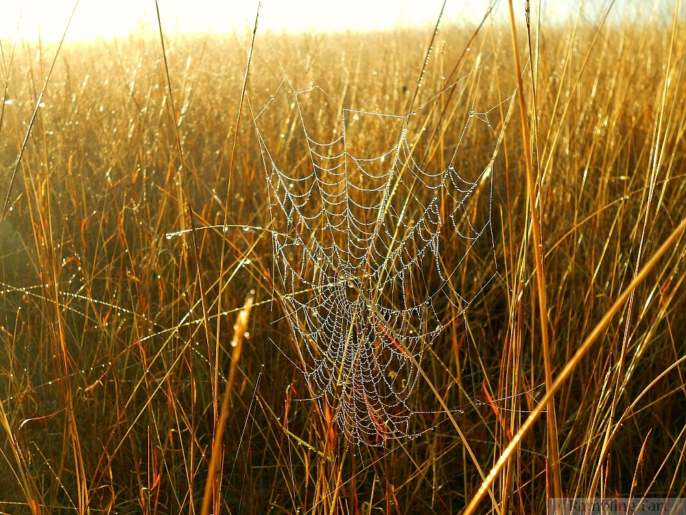 glittering spider web