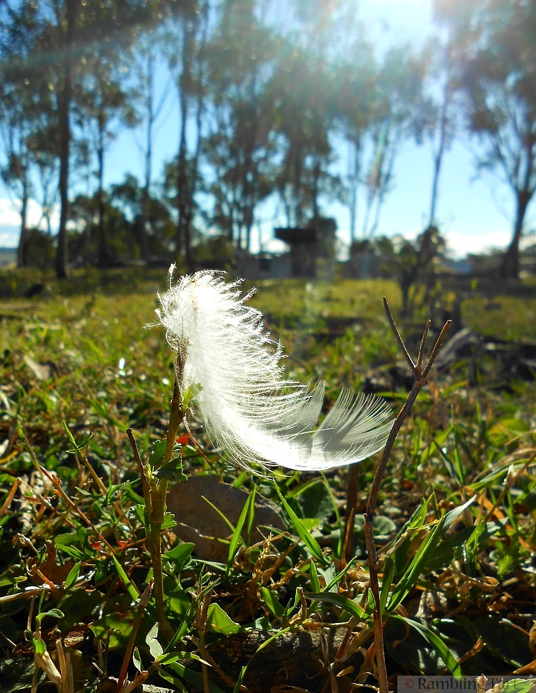 white feather sun