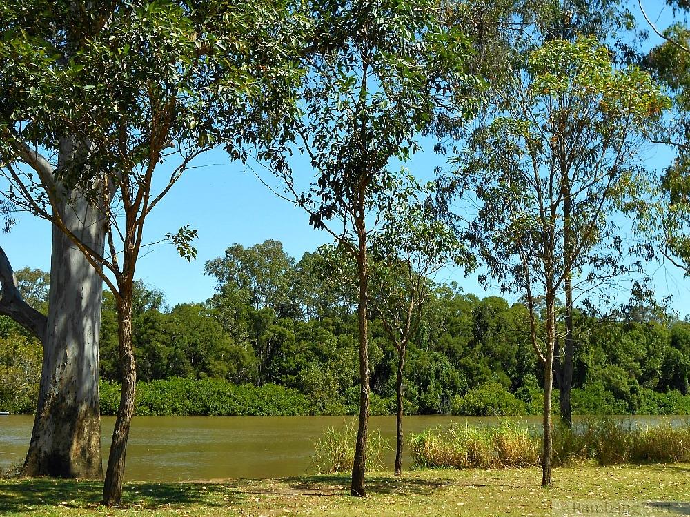 Logan River trees