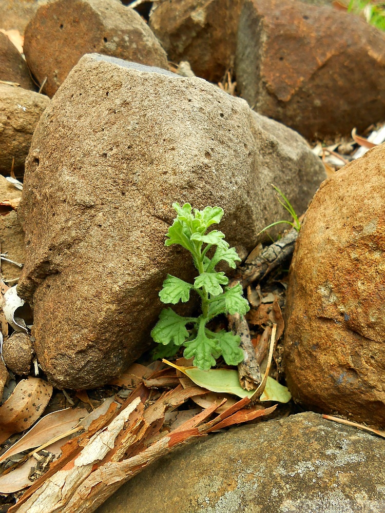 seedling in the rocks