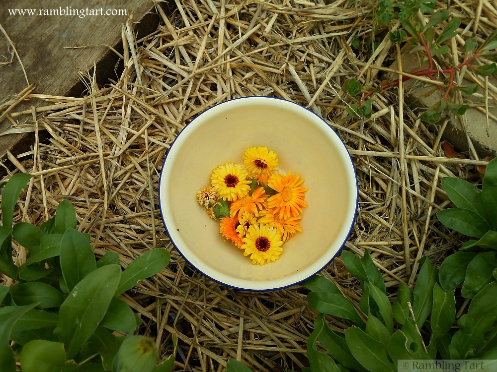 bowl of calendula blossoms
