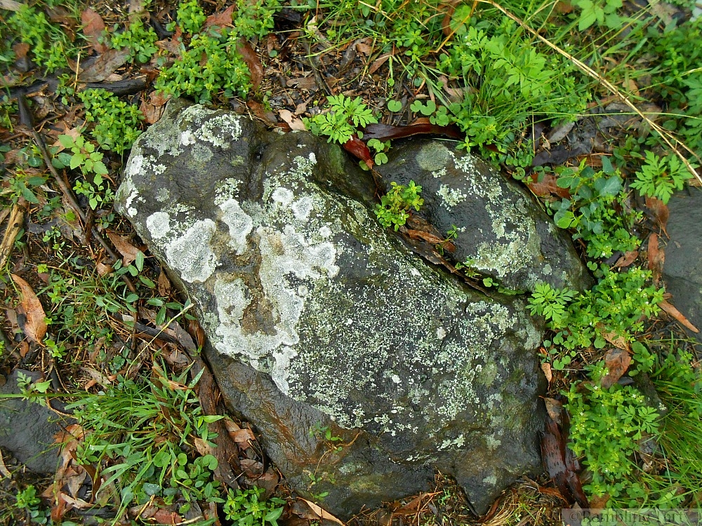 lichen covered rock
