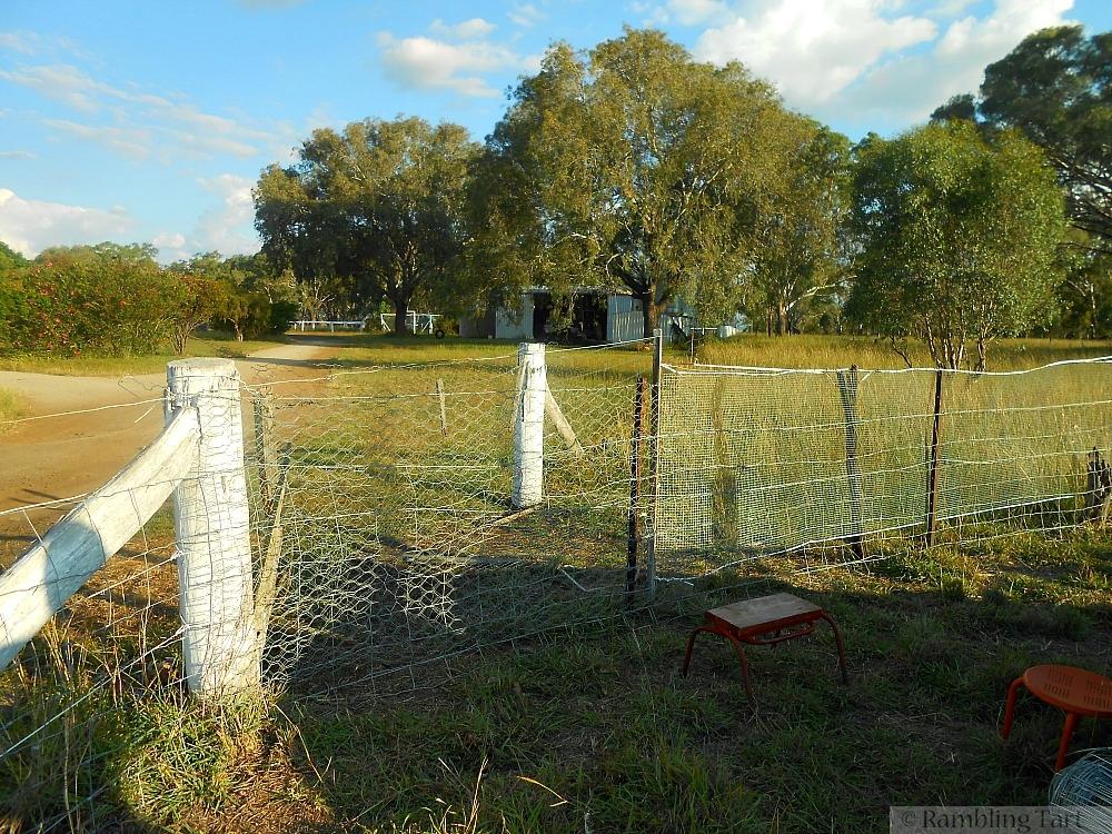 mended goat fence