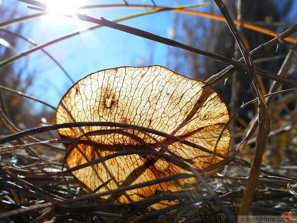 illuminated seed pod