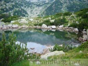 Small pool and Pinus mugo shrubs, near Popovo Ezero, Pirin Mountains, Bulgaria by kikosev