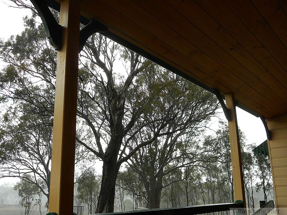 gum trees in storm