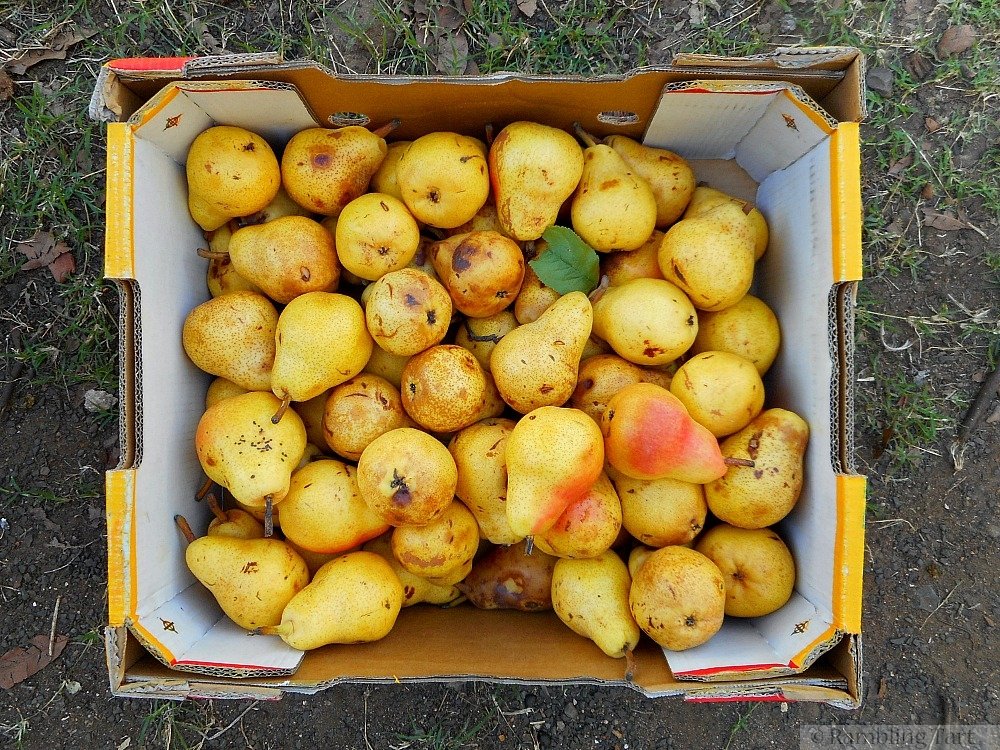 box of ripe pears